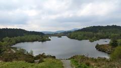 Lake Llyn Elsi