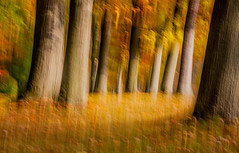 edwinloyolaNewYorkPortfolioReviewFall01 (Edwin Loyola) Tags: autumn winter summer abstract fall nature spring seasons fineart fourseasons icm esl intentionalcameramovement edwinsloyola edwinloyola edwinloyolaphotography eslphotography edwinsloyolaphotography