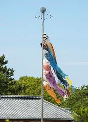 _DSC9383 (aeschylus18917) Tags: nature japan spring  carp ibaraki windsock childrensday hitachinaka ibarakiken     hitachinakashi hitachiseasidepark danielruyle aeschylus18917 danruyle druyle   kokueihitachikaihinken
