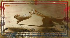 Milk Weed Pods (Karen McQuilkin) Tags: abstract gold framed instudio hss milkweedpods theawardtree ownlayers karenmcquilkin