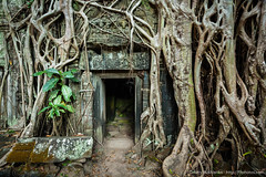 Ancient stone door and tree roots, Ta Prohm temple, Angkor, Cambodia (Dmitry Rukhlenko Travel Photography) Tags: door old travel tree tourism archaeology monument stone wall asian religious temple ancient ruins asia cambodia doors cambodian khmer stones famous religion ruin roots entrance landmark angkorwat tourist architectural doorway portal exit siemreap angkor wat taprohm portals indochina angkorthom placeofworship religiousbuilding