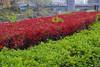 109_1113-IMGP0833_IMGP0833 (moksei14) Tags: 滝子山 201111 中央線沿線 20111113