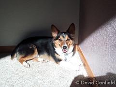 February 7, 2015 - Yuma enjoying the sunlight (David Canfield)