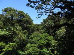"""La Réserve de Monteverde: vue du pont suspendu <a style=""""margin-left:10px; font-size:0.8em;"""" href=""""http://www.flickr.com/photos/127723101@N04/26340454343/"""" target=""""_blank"""">@flickr</a>"""