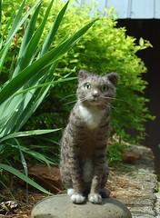 Fuzzy Gali (rootcrop54) Tags: sculpture art wool felted cat miniature handmade ooak tabby needle needlefelting gali needlefelted