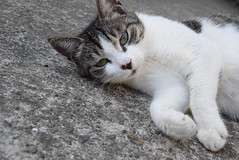 (March Hare1145) Tags: pet animal cat