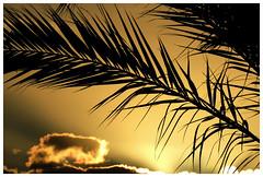 Tenerife (dreams of the earth) Tags: world las blue sunset red sky mer fleur animal sport rock montagne plante volkswagen de island la soleil fly photo los airport pub nikon eau mare earth pierre colonial hard coucher cte du ciel le tenerife ryanair nuage bateau paysage vague canaries extrieur arbre plage americas oiseau paradis vulcano palmier calme papagayo garachico coccinelle lezard lzard rivage aircooled nostrum caleta gigantes ocan cristianos beauvais surraliste littoral vhicule bordure