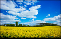 160428-7766-XM1.jpg (hopeless128) Tags: trees sky france clouds fields eurotrip fr rapeseed 2016 nanteuilenvalle aquitainelimousinpoitoucharentes aquitainelimousinpoitoucharen