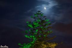 Reaching to the moon (Salim El Khoury) Tags: longexposure nightphotography sky lebanon moon tree nature night clouds contrast dark nikon creative moonlight byblos d7200