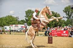 Pintos_Equitana_2016-9911 (tokerpress) Tags: messe pferde shou pintos tokerpress alexandertoker equitanaopenair ctokerpress2016 gestütgoldenepintos