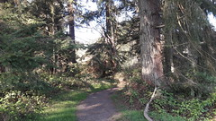 20160331_091517 (ks_bluechip) Tags: creek evans trails preserve sammamish usa2106
