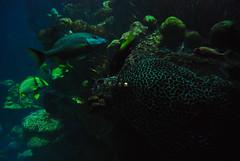 (jna.rose) Tags: ocean sea fish color water coral boston swimming swim aquarium nikon colorful underwater tank under nikond80