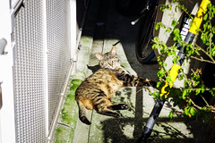 Today's Cat@2016-06-10 (masatsu) Tags: cat pentax osaka catspotting mx1 thebiggestgroupwithonlycats