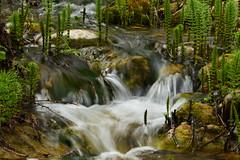 Primavera en Mura (pilarzuheros) Tags: naturaleza primavera ro river paisaje mura printemps
