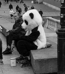 Resting Panda (WrldVoyagr) Tags: bw lumix panda streetphotography poland polska panasonic warsaw pl gx7 masovianvoivodeship