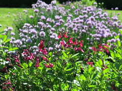 Rawlings Conservatory ~ HCS! (karma (Karen)) Tags: flowers gardens dof bokeh maryland baltimore chives cliche hcs 4spring druidhillpark rawlingsconservatory cmwd redtexassage