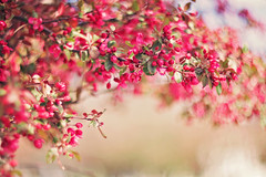 """""""Of this be sure: You don't find the happy life...you make it"""" ~Thomas S. Monson (Sandra H-K) Tags: flowers nature outside spring soft dof outdoor branches blossoms may depthoffield softfocus dreamy serene springtime"""