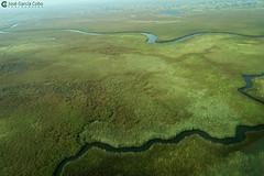 15-09-20 Ruta Okavango Botswana (82) R01 (Nikobo3) Tags: travel parque paisajes naturaleza color canon ngc delta unesco viajes botswana okavango vuelo twop frica vidasalvaje g7x omot deltadelokavango flickrtravelaward canong7x nikobo josgarcacobo todosloscomentarios