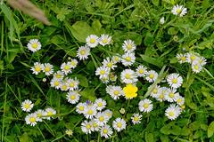 Mai Botanik - 2016-0005_Web (berni.radke) Tags: may growth mai botany botanicalgarden mnster botanik botanischergarten wachstum