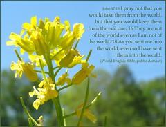 John 17 Not out of the world (Martin LaBar) Tags: world poster jesus brassicaceae intheworld outoftheworld john17 highpriestlyprayer