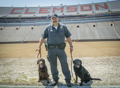 Clemson service dogs (ken_scar) Tags: bombsniffingdog servicedog clemsonuniversity policedog dog police policeofficer campuspolice deathvalley memorialstadium southcarolina kenscar