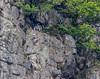 9Q6A1980 (2) (Alinbidford) Tags: waterfall lakedistrict cumbria theband rockclimbers windermere buttermere hillwalking ullswater loweswater wrynosepass greyfriar ariaforce redpike thirlmere sidepike bowfell greywagtail lowfell langdalepikes dungeonghyll swirlhow hallinfell arthurspike mellbreak churchbridge scaleforce fellbarrow hencomb greatcarrs littlemellfell wetherhill wetsideedge wrynosebottom alancurtis lingmoortarn sourfootfell loadpothill greatborne steelbrow holmeswood littledodd starlingdodd steelknotts littlecarrs alinbidford smithyfell hattergillhead loftbarrow flourterntarn brownhowes