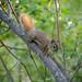Invisible Squirrel