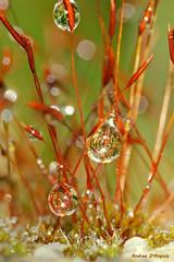 Droplets (Darea62) Tags: droplet moss rain macro a230 water reflections
