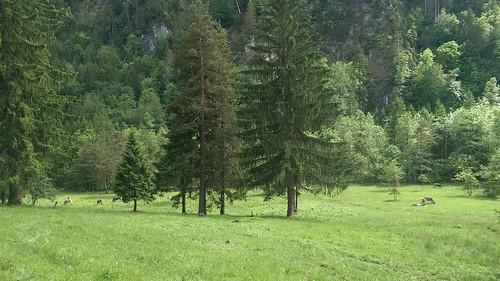 Vom Alatsee nach Bad Faulenbach
