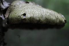 20160604151550_IMG_1320 (arielandrew) Tags: mushroom trees nature outdoors glenlyon woods pennsylvania canon eos 750d rebel t6i