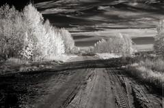 (engine9.ru) Tags: road trees sky bw ir