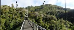 Suspension Bridge (Andos_pics) Tags: bridge newzealand suspension reservoir wellington karori zealandia