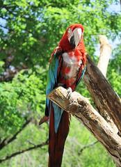 Catoctin Zoo ~ another Macaw post - HBW! (karma (Karen)) Tags: birds dof bokeh maryland brightcolors macaw zoos thurmont hbw frederickco catoctinzoo bokehwednesdays