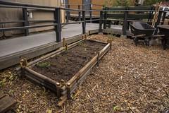 Yurt Village Garden Bed (TreePeople) Tags: fruit garden tomato bed village vegetable watermelon yurt compost raised treepeople