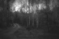 *** (pszcz9) Tags: road las blackandwhite bw tree nature monochrome forest landscape spring sony poland polska birch droga a77 wiosna przyroda drzewo beautifulearth brzoza pejza
