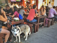 Berkeley, California (Sharon Hahn Darlin) Tags: husky