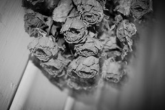 Once upon a time (reza.wahid1) Tags: flowers love dead time story memory once upon