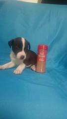 Mika (aliciap.clausell) Tags: perro cachorro animal dog mascotas