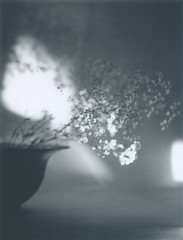 Light and shade of the haze grass, still life (declic65.miura) Tags: film polaroid fuji large instant format expired graflex rodenstock superspeedgraphic optar135mm fp3000b45 4x5instant