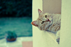 Gigi (Isabella Pirastu) Tags: cats animal animals cat kitten teal gatto thelittledoglaughed thecatwhoturnedonandoff