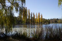 Autumn trees in a park, Canberra (Anna 666) Tags: park blue autumn trees sky sculpture reflection bird fall leaves yellow bench pond path australia willow canberra lakeburleygriffin