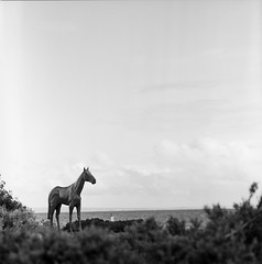 Horse on Beach Road (faVori rouge) Tags: road horse beach rolleiflex lightleak fujifilm sl66 parkdale acros ddx v700