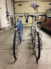 bar heights (jimgskoop) Tags: blue bicycle cycling pelican custom racks randonneur boxdogbikes 2013 bdb wintercycles