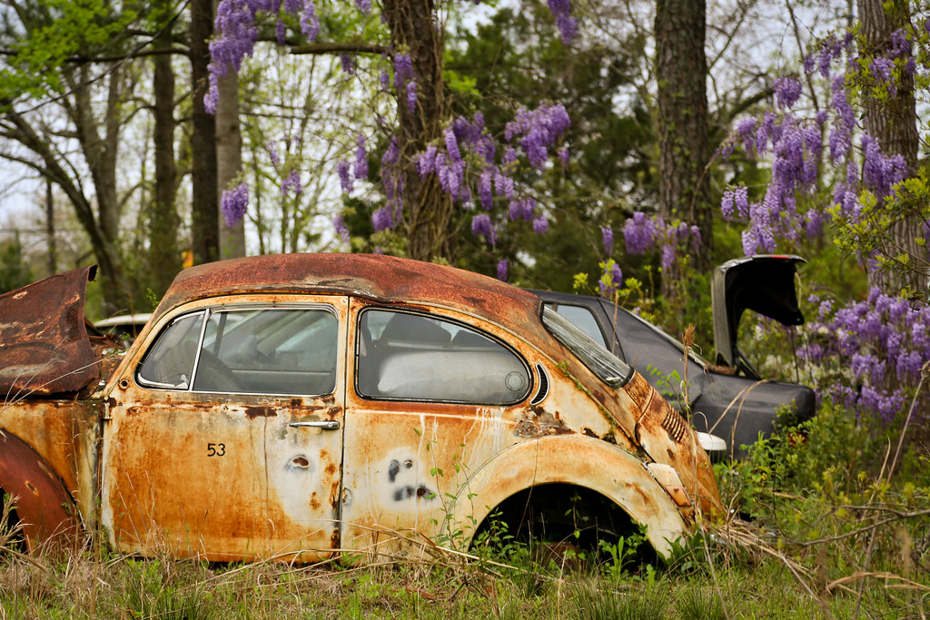 The World's most recently posted photos of bug and junkyard - Flickr