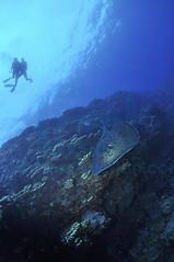 2012 02 METTRA OCEAN INDIEN 0565