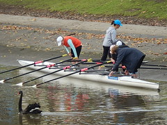 Women Rowers (with Swan) (mikecogh) Tags: swan women canoe finished rowing oars yarrariver