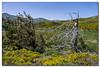 _JRR2847 (JR Regaldie Photo) Tags: mountain snow rocks nieve lagunas sierrademadrid peñalara jrregaldiephoto