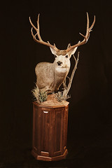 "Utah Taxidermist • <a style=""font-size:0.8em;"" href=""http://www.flickr.com/photos/27376150@N03/9350737897/"" target=""_blank"">View on Flickr</a>"
