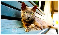 Felis silvestris catus #flinpourlautre (nikosaliagas) Tags: cat canon chat greece gato 5d grece markiii