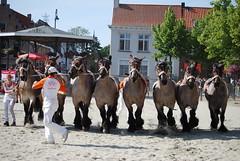 trekpaardkeuring ijzendijke 21072013 4053 (jo_koneko_san) Tags: horses horse holland netherlands cheval nederland zeeland chevaux hollande zeeuwsvlaanderen 2013 ijzendijke trekpaard zeeuwstrekpaard trekparden